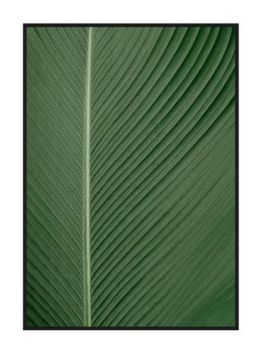 Постер на стену с зеленым листом